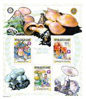 W.A.S. Calalog : Boy Scout and Mushrooms 2002 - 2002 - Guinea -  Faunes & Flores, Scoutisme