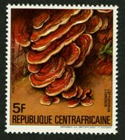 W.A.S. Calalog : Local Mushrooms 1984 - 1984 - République de centrafrique -  Faunes & Flores