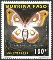 W.A.S. Calalog : Butterflies / Insect - 1996 - Burkina Faso -  Faunes & Flores