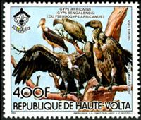 W.A.S. Calalog : Fauna , Animals Monkeys / Falcon - 1984 - Burkina Faso -  Animaux